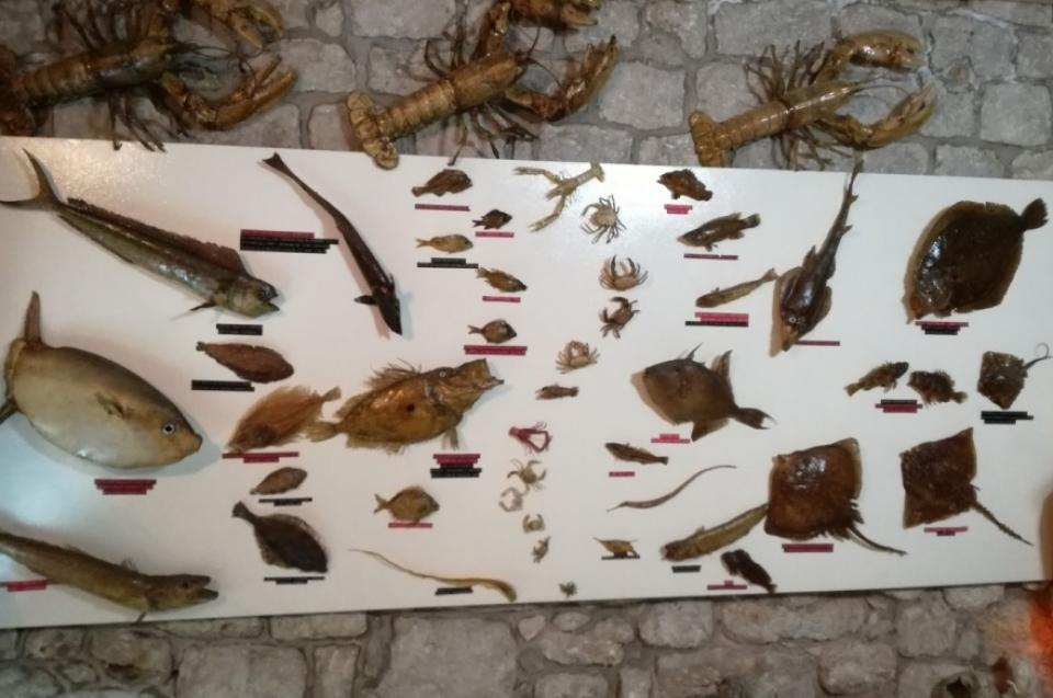 Museum of fish, crabs and shells